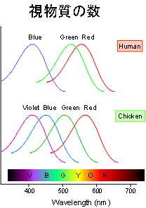 視物質の波長特性
